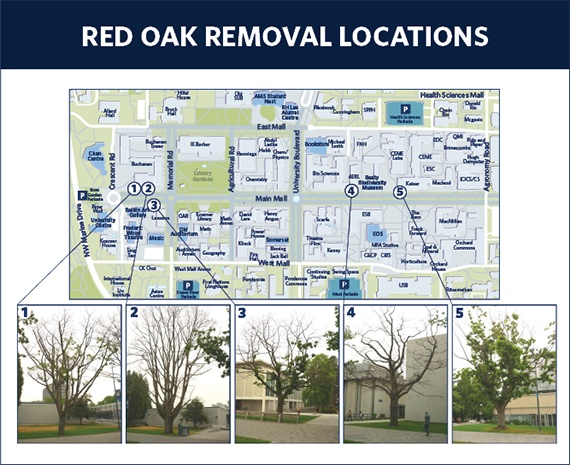 Web image Tree locations maps copy
